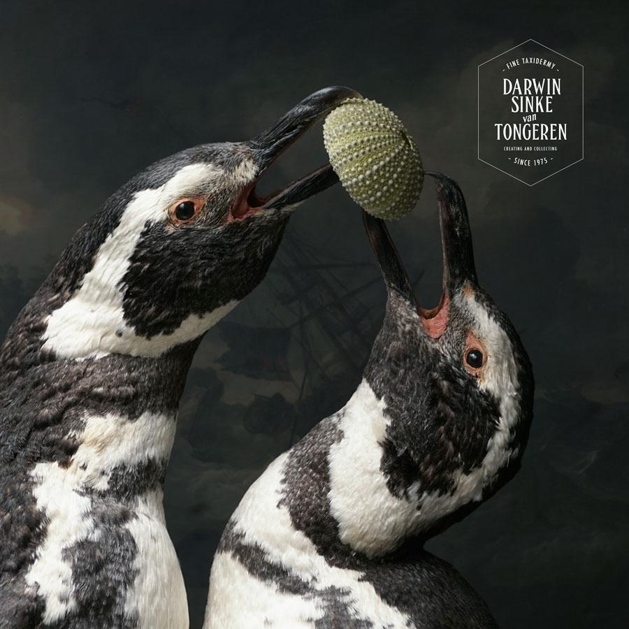 DSvT-Penguins-14-900px.jpg