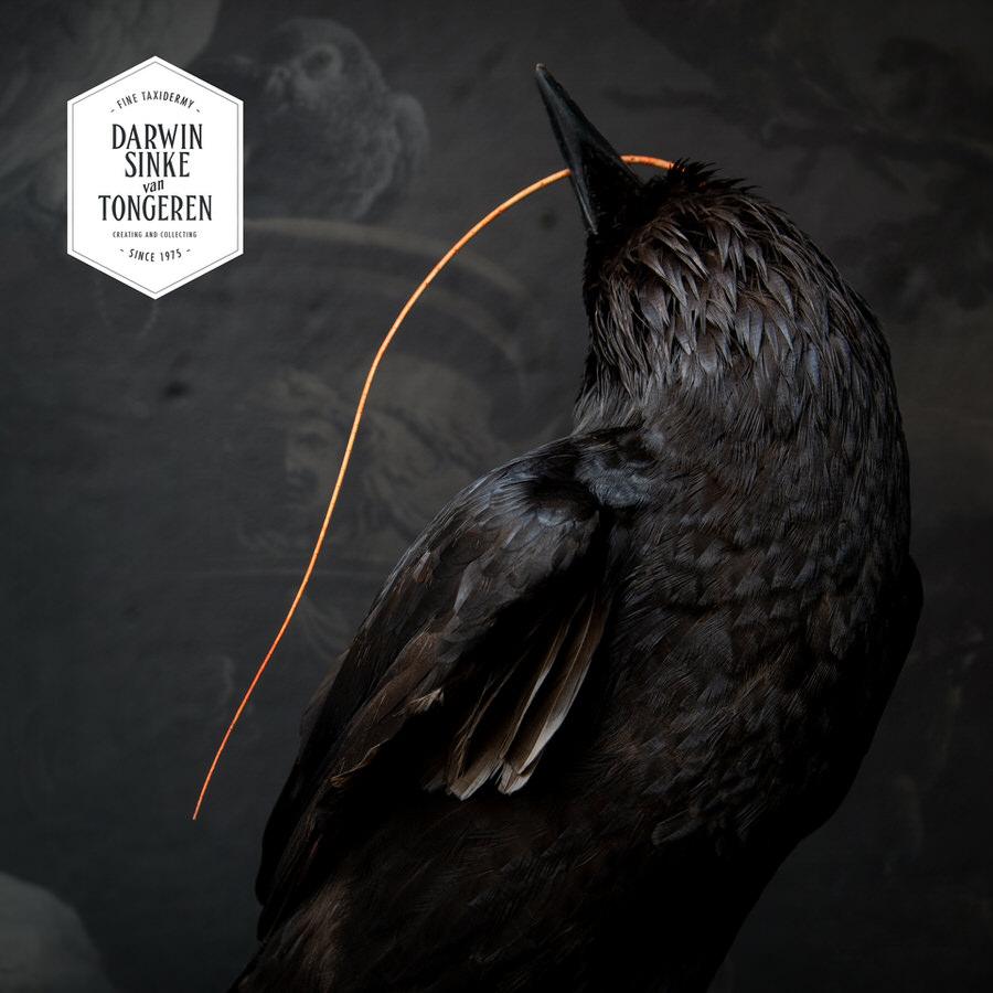 DSvT-Raven-Hermit-Crab-02_900px.jpg