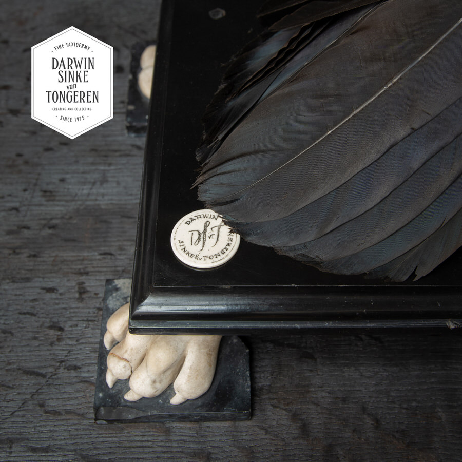DSvT-Raven-Hermit-Crab-03-No-Logo_900px.jpg
