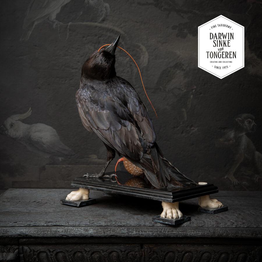 DSvT-Raven-Hermit-Crab-06_900px.jpg