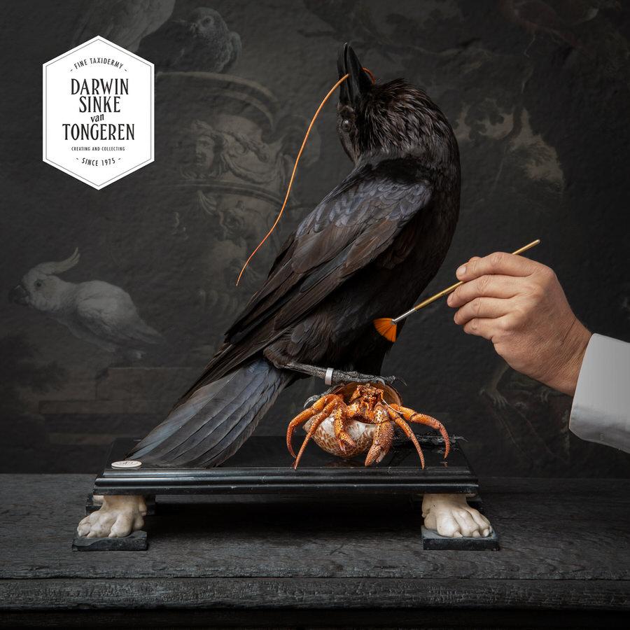 DSvT-Raven-Hermit-Crab-01_900px.jpg