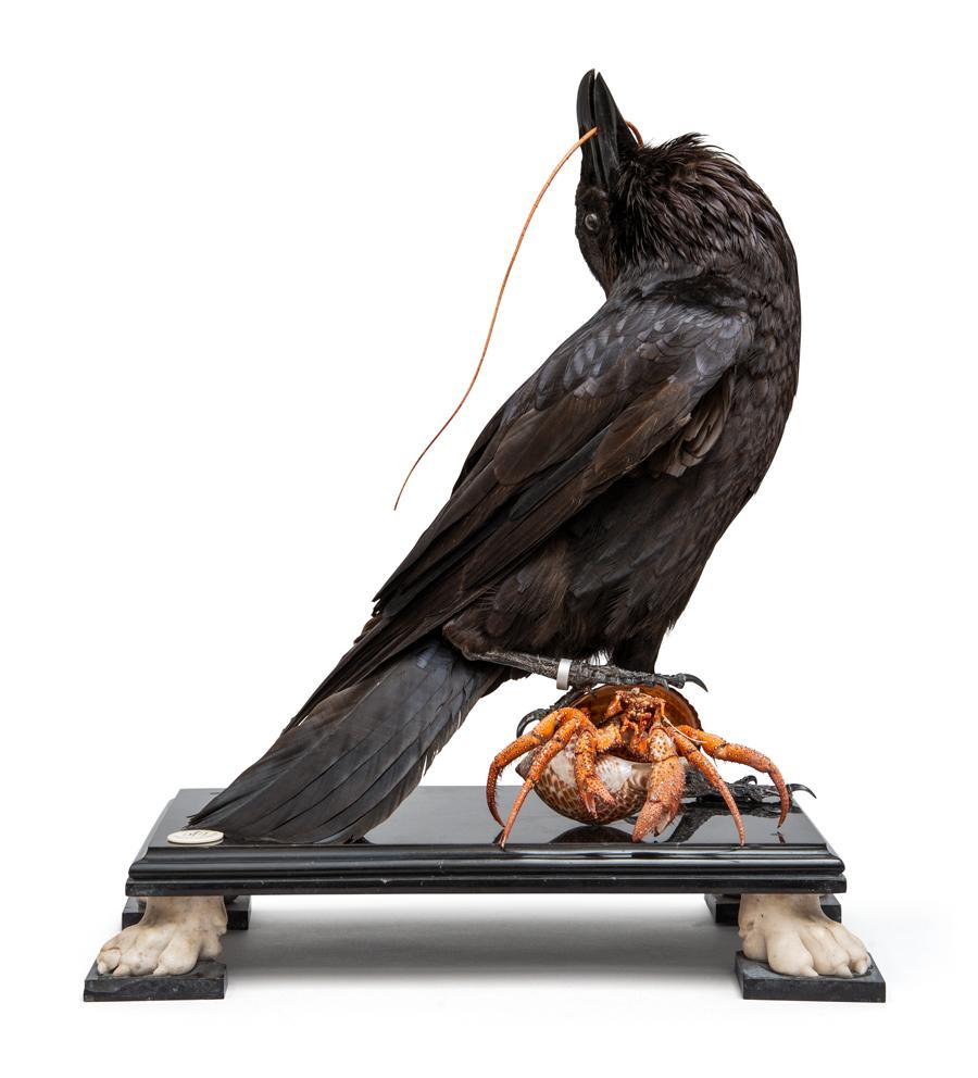 DSvT-Raven-Hermit-CLIP-02.jpg