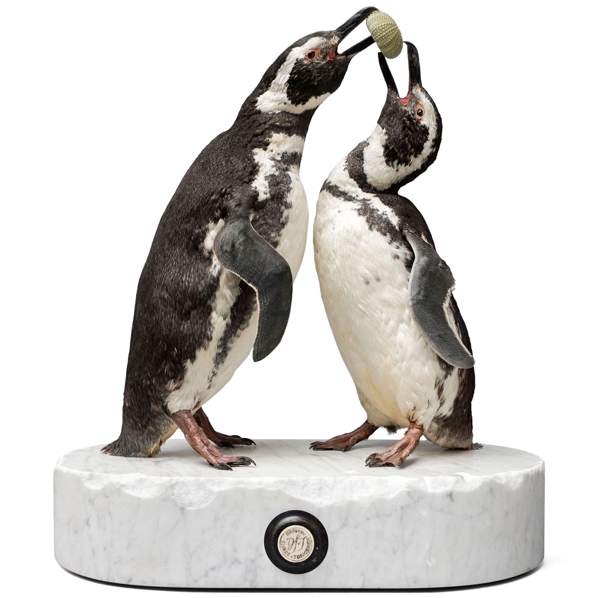 Penguins-CLIP.jpg