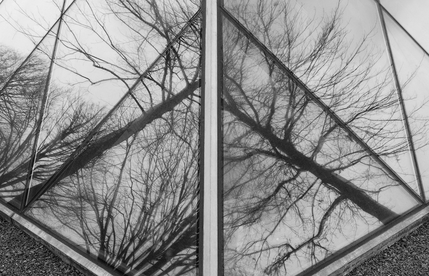 reflection1bw.jpg