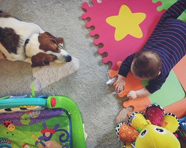 I'm hoping to start up my themes again soon, but in the meantime, I've started @eleanor_and_brewer to post some more thoughtfully composed photos of the kids. Eleanor definitely wants to be friends, Brewer isn't sure yet. #dogsofinstagram #babiesofinstagram
