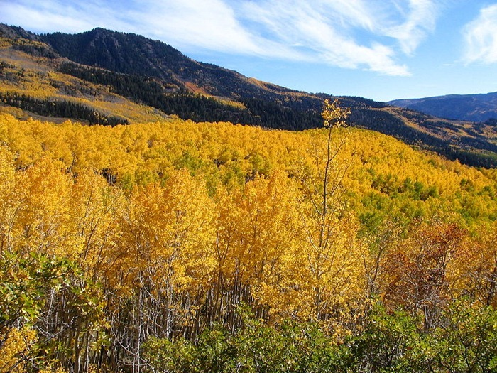 pando-the-single-largest-living-organism-on-earth