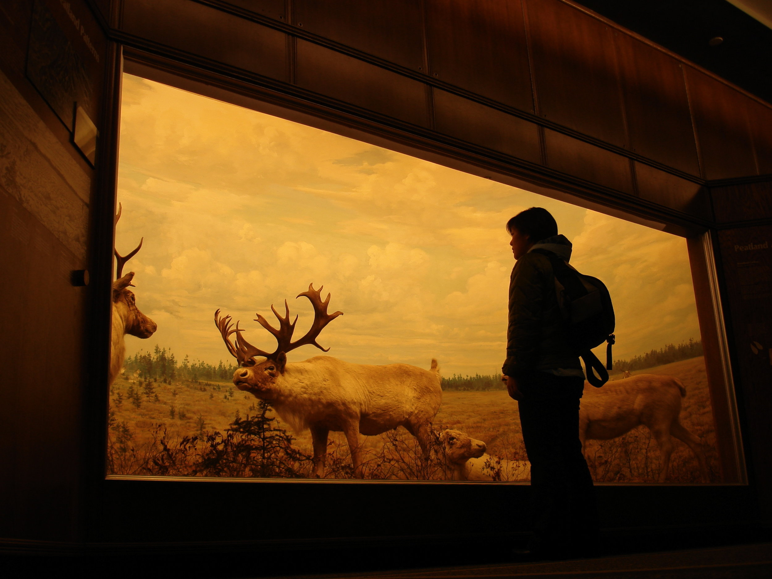 Bell_Museum_of_Natural_History_diorama.jpg