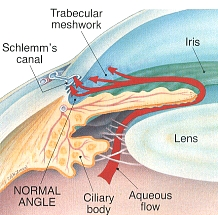 This is how an eye without glaucoma produces and drains fluid (known as 'aqueous humour') in the eye.