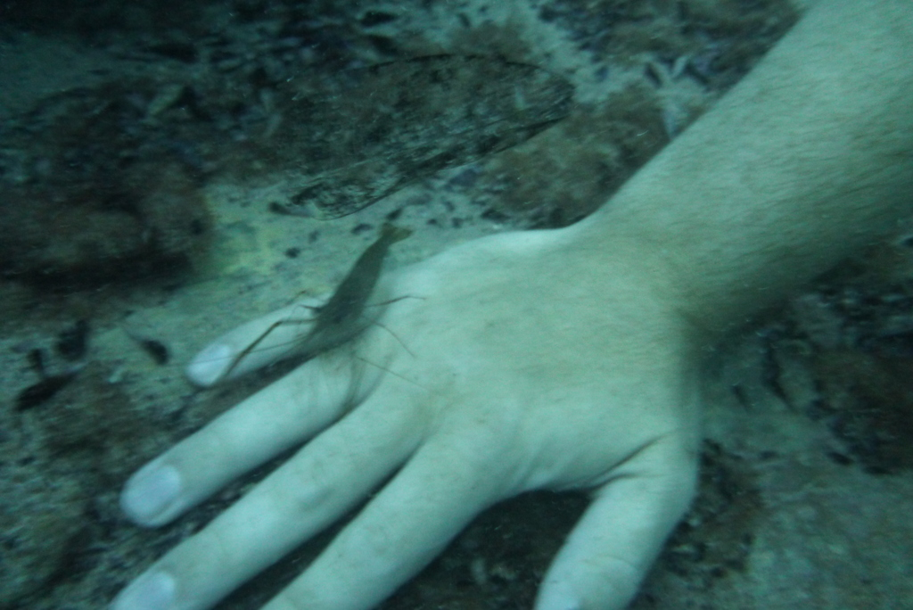 A cleaner shrimp checks out my hand in Barracudda Lake