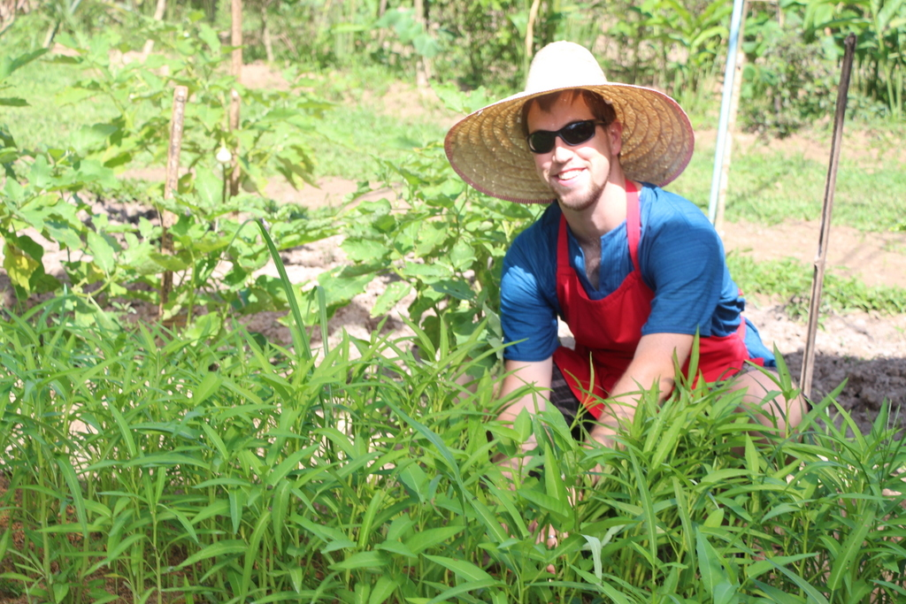 Andrew picking garlic chives, also known as Chinese chives to add savory flavor to our dishes.