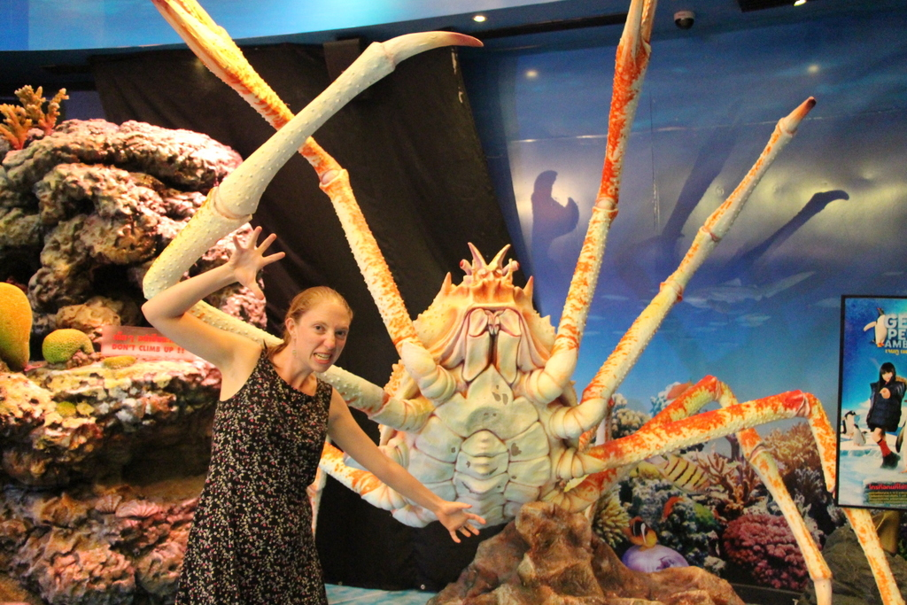 It's our friends from Japan - the amazing SPIDER CRABS! They missed us so they came to hang out at this mall in Bangkok.