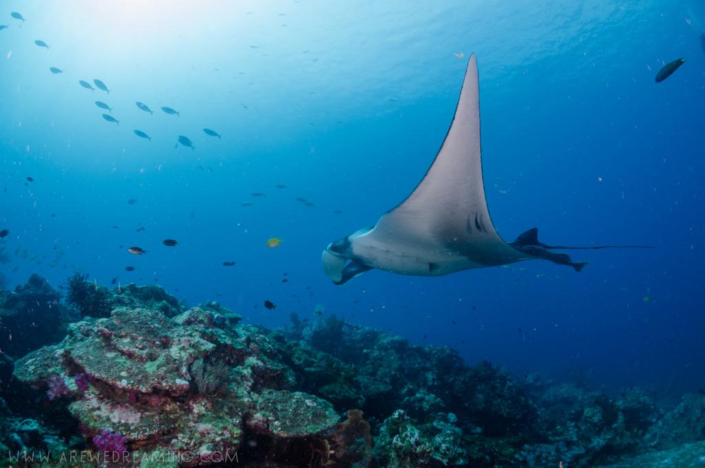 DQ 8 - Nov 2014 - Similan Diving Safaris - AreWeDreaming.com-161.jpg