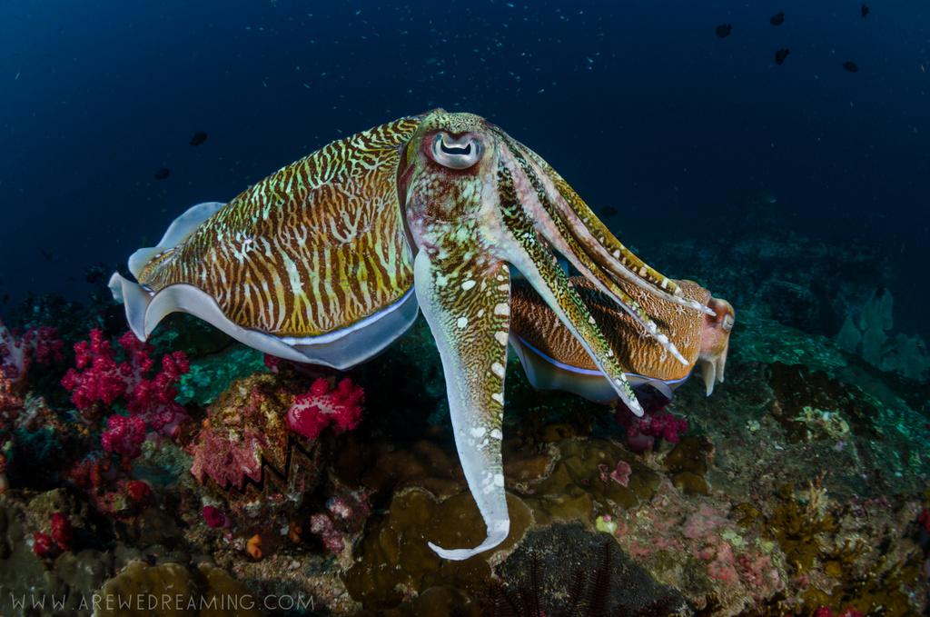 DQ 8 - Nov 2014 - Similan Diving Safaris - AreWeDreaming.com-321.jpg