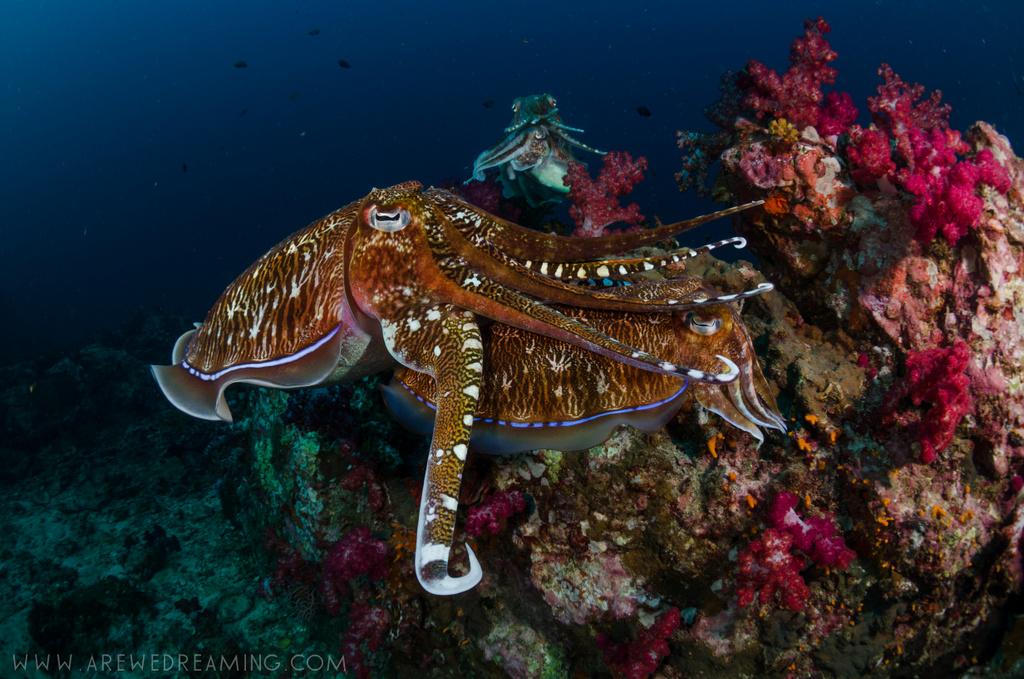 DQ 8 - Nov 2014 - Similan Diving Safaris - AreWeDreaming.com-319.jpg
