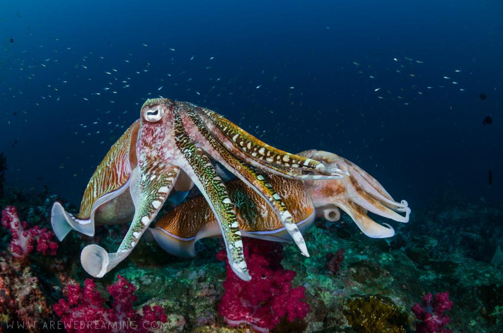 DQ 8 - Nov 2014 - Similan Diving Safaris - AreWeDreaming.com-320.jpg