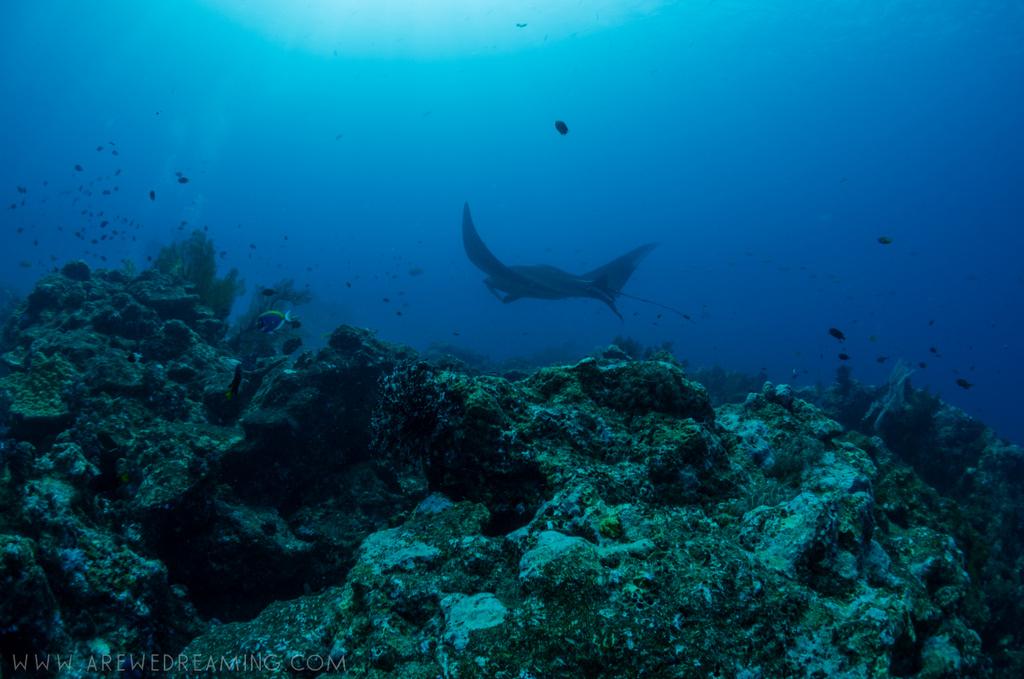 DQ 8 - Nov 2014 - Similan Diving Safaris - AreWeDreaming.com-164.jpg