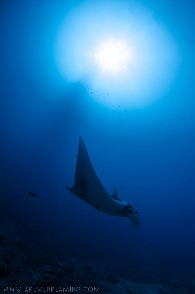 DQ 8 - Nov 2014 - Similan Diving Safaris - AreWeDreaming.com-218.jpg