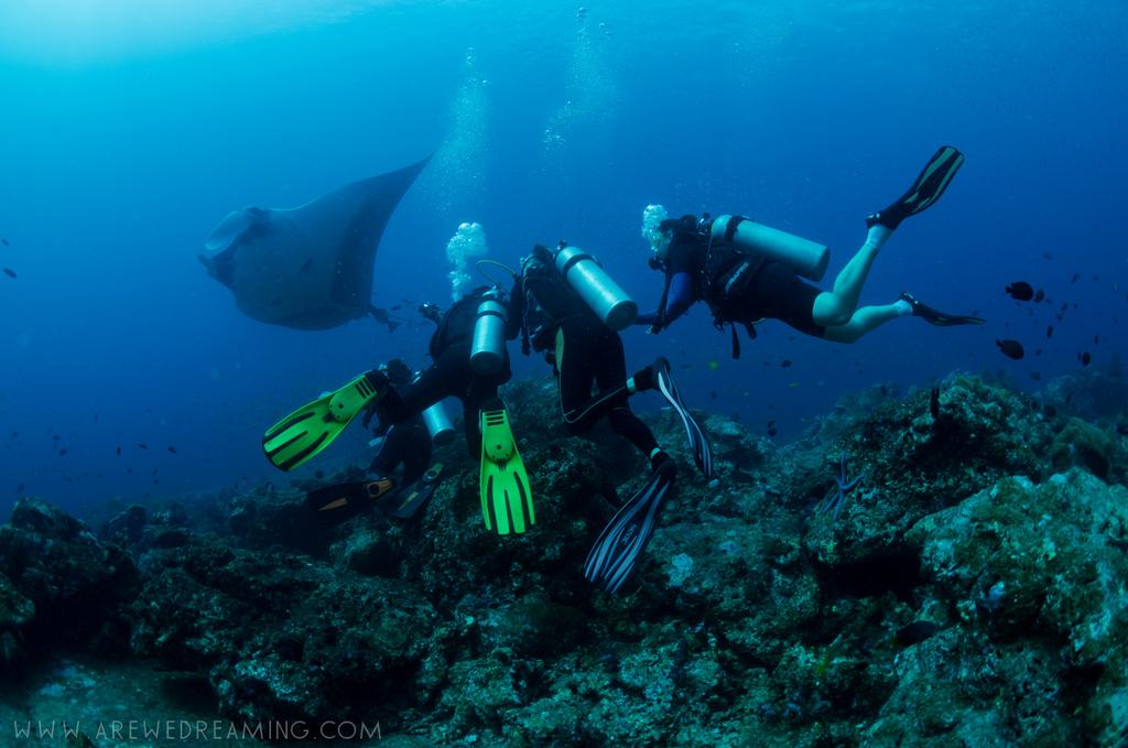 DQ 8 - Nov 2014 - Similan Diving Safaris - AreWeDreaming.com-169.jpg