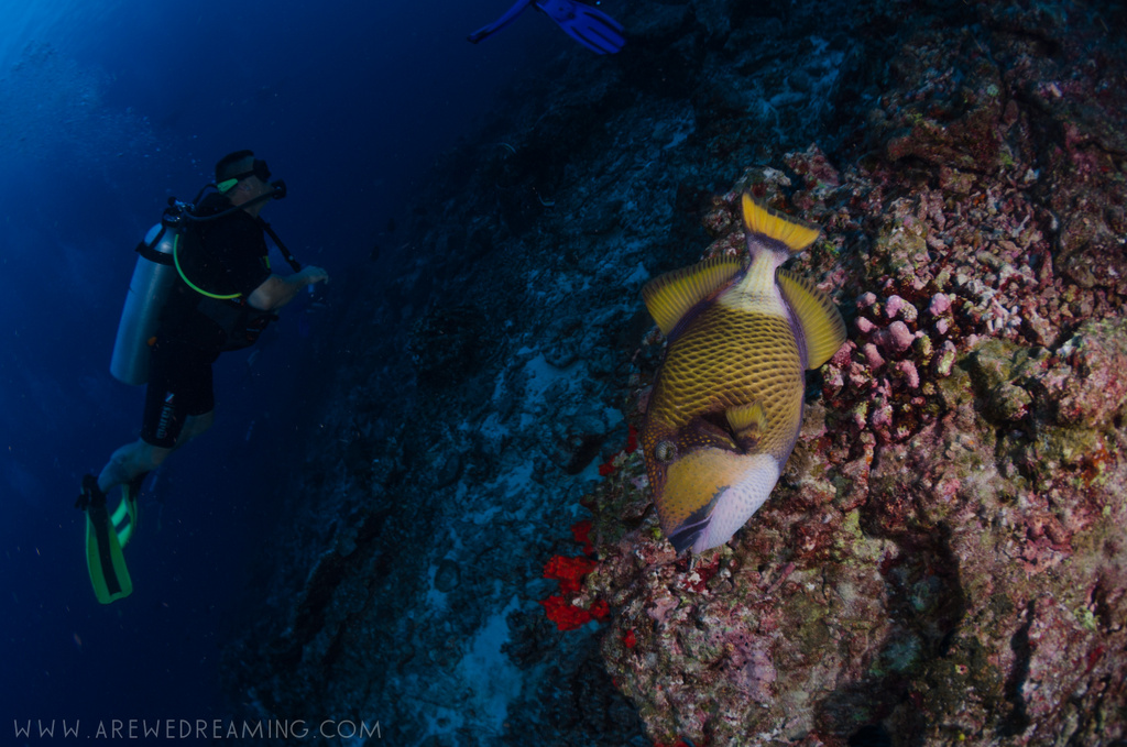 DQ 8 - Nov 2014 - Similan Diving Safaris - AreWeDreaming.com-415.jpg