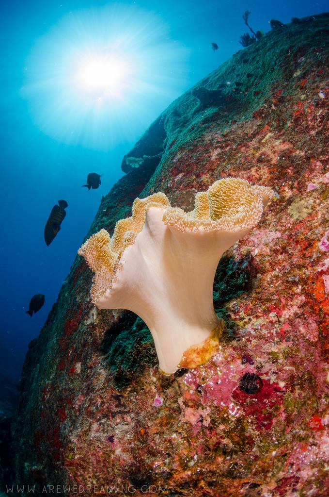 DQ 8 - Nov 2014 - Similan Diving Safaris - AreWeDreaming.com-35.jpg