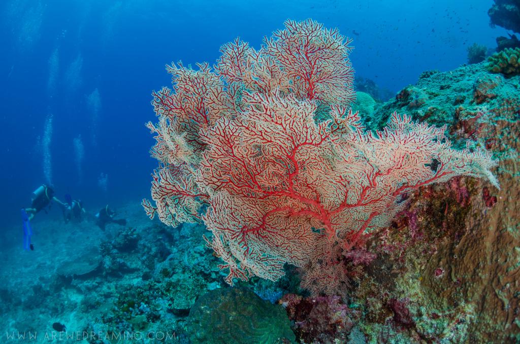 DQ 8 - Nov 2014 - Similan Diving Safaris - AreWeDreaming.com-66.jpg