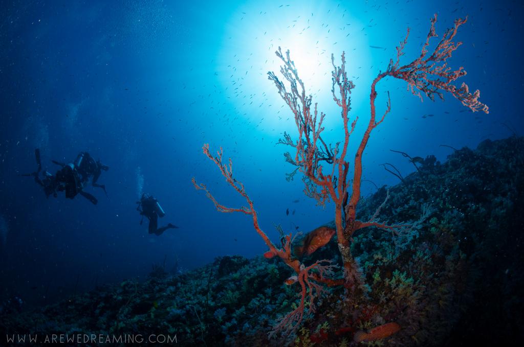 DQ 8 - Nov 2014 - Similan Diving Safaris - AreWeDreaming.com-112.jpg