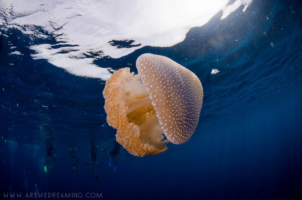 DQ 8 - Nov 2014 - Similan Diving Safaris - AreWeDreaming.com-249.jpg