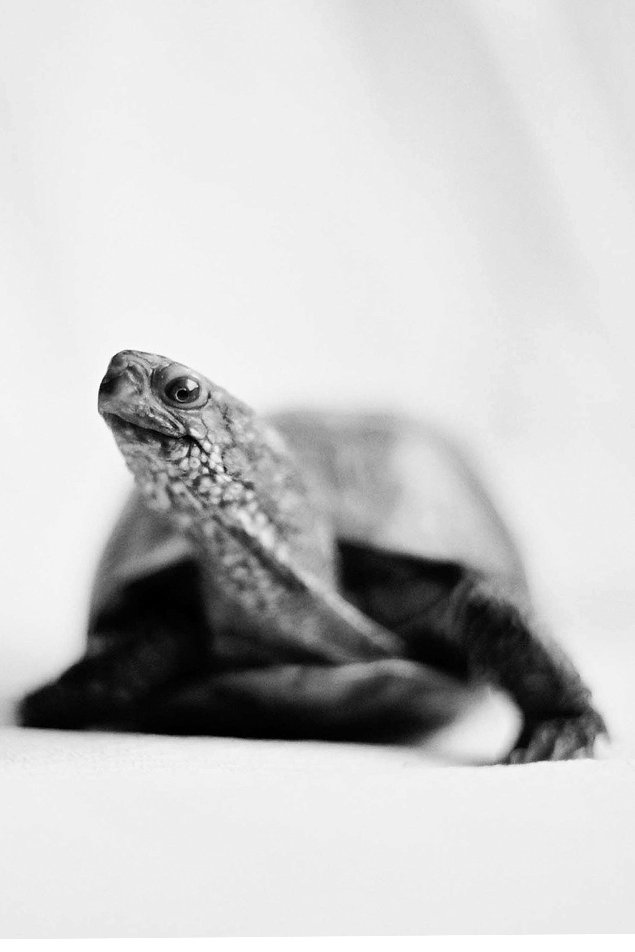 turtle one.jpg