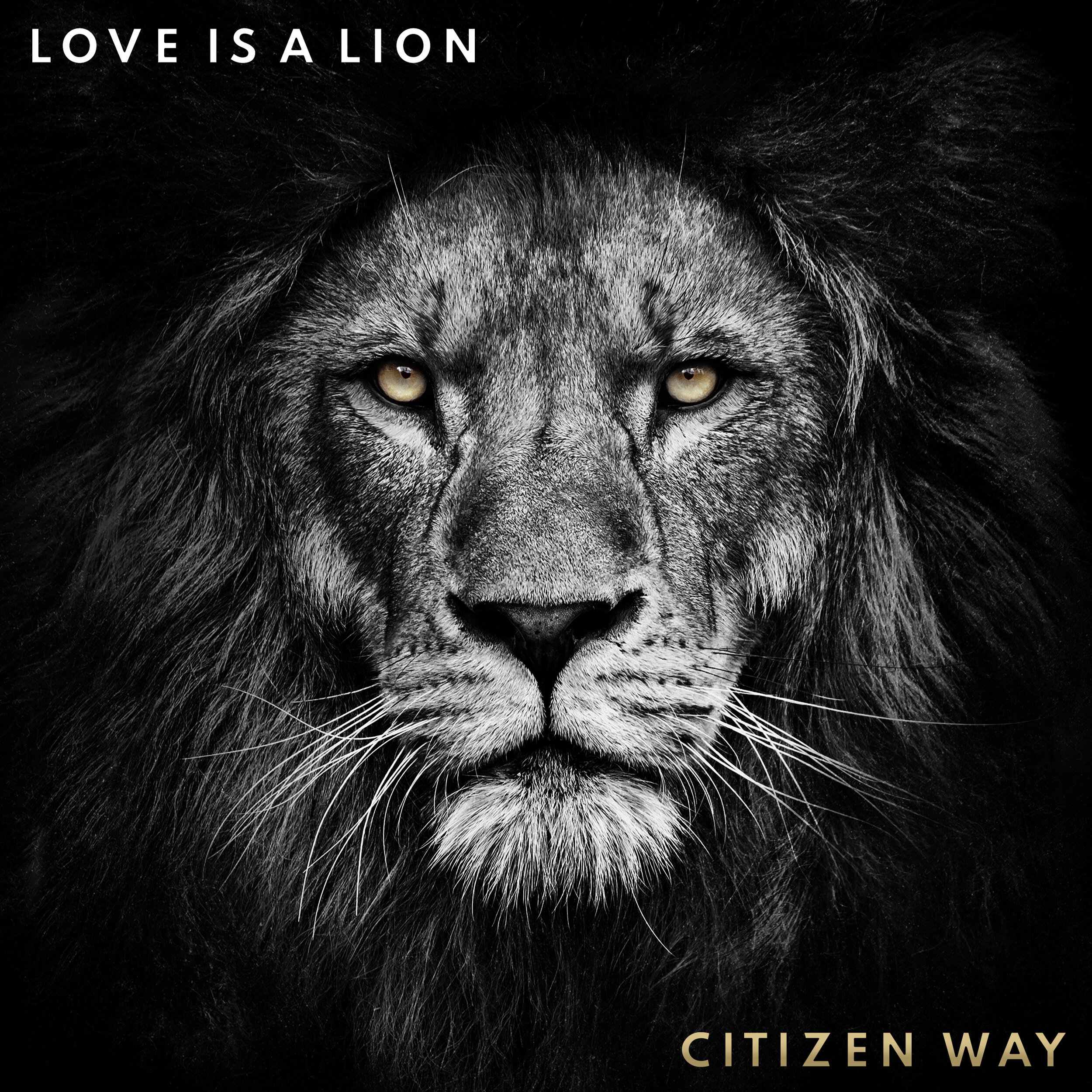 Love Is A Lion Cover.JPG