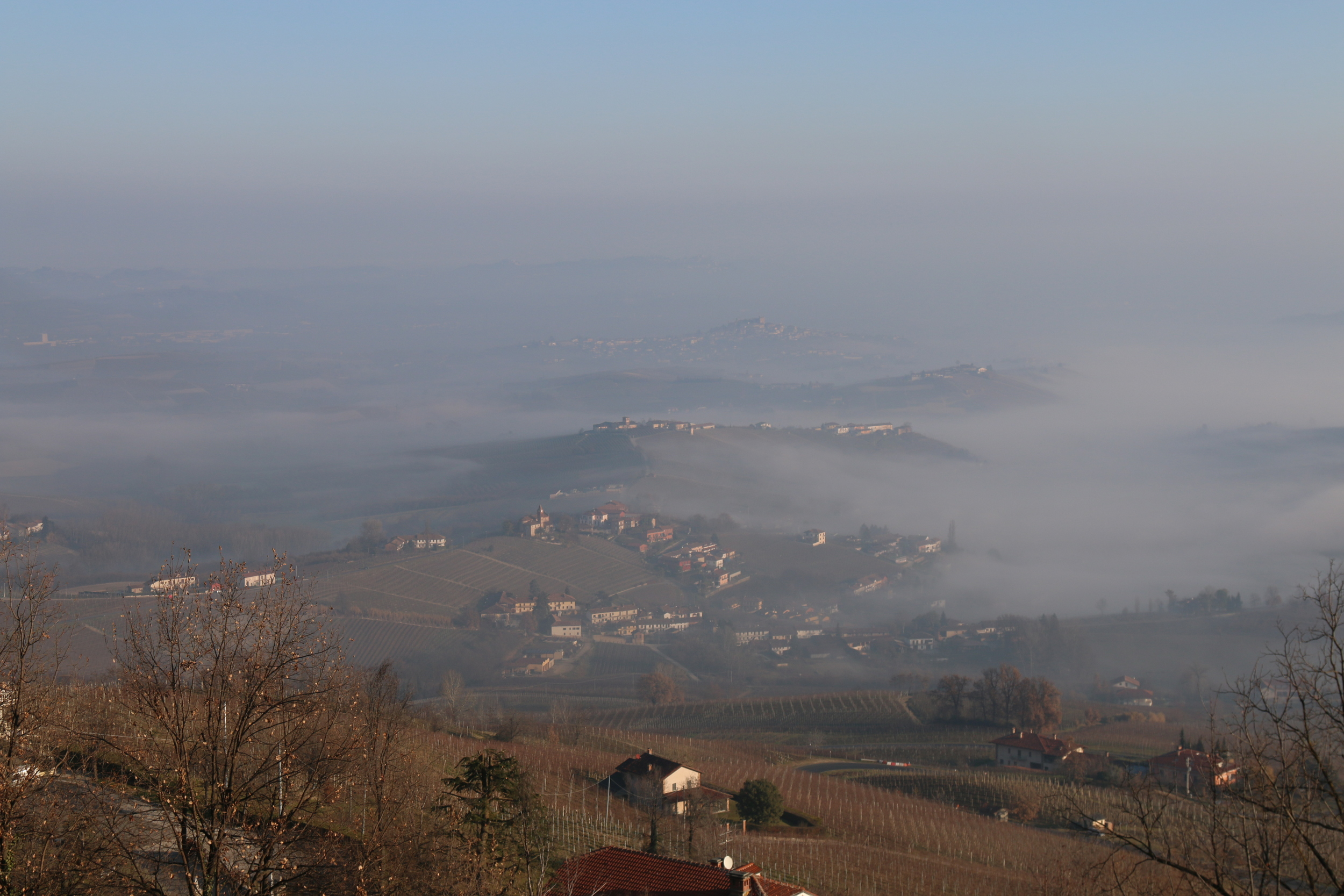 history of wine [barolo, italy]