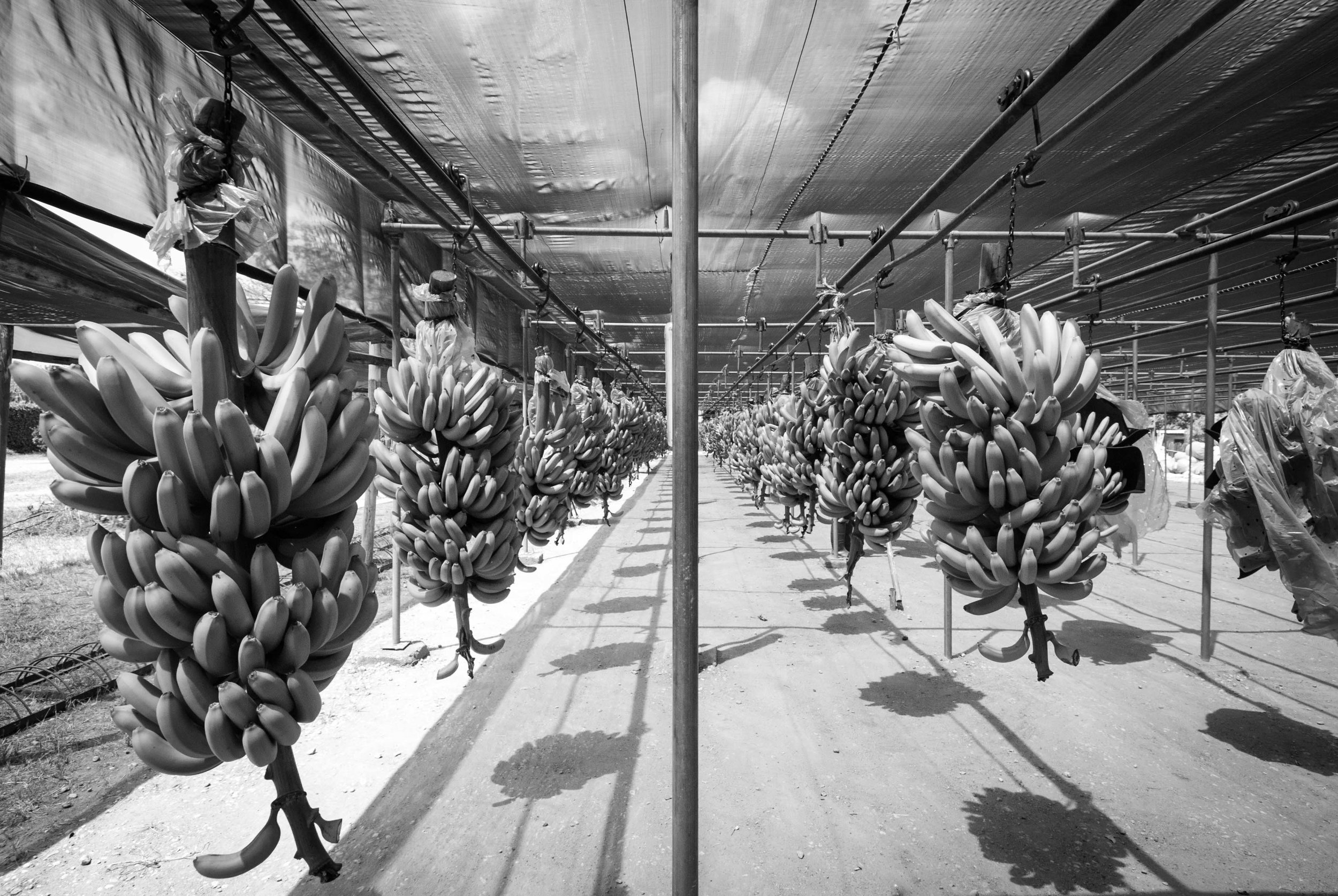 20-banana-DSC_0036.jpg