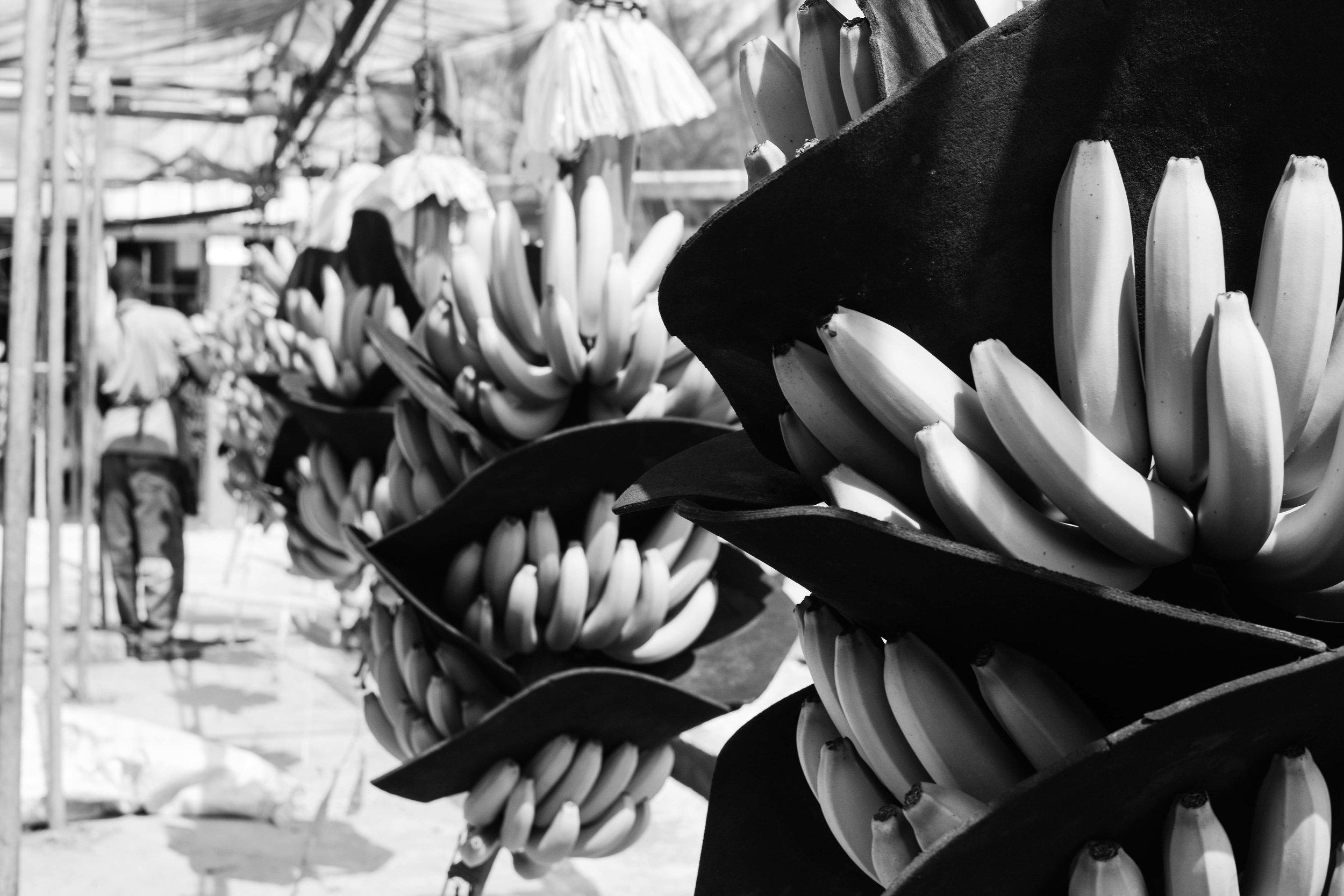 Se coloca una protección entre las manos para evitar marcas. El cliente tiene estándares muy altos y no quieren bananas dañadas o marcadas.   A protection is placed between the hands to avoid marks. The client has very high standards and does not want damaged or scratched bananas.