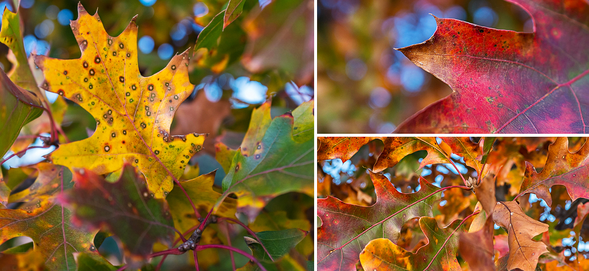 fall_leaves_dallas_2013.jpg