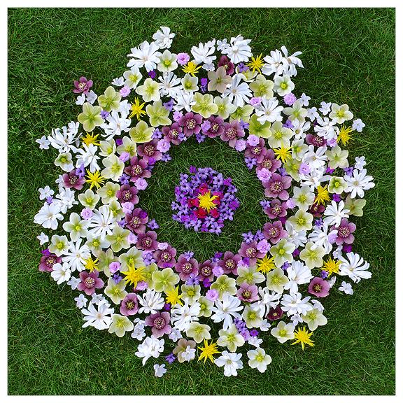flowerring8x8.jpg