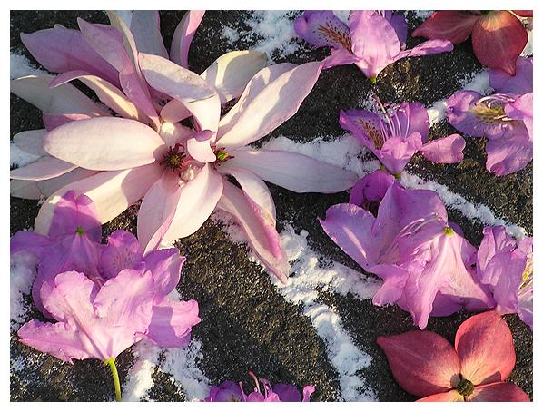 Star Lotus (detail 2)
