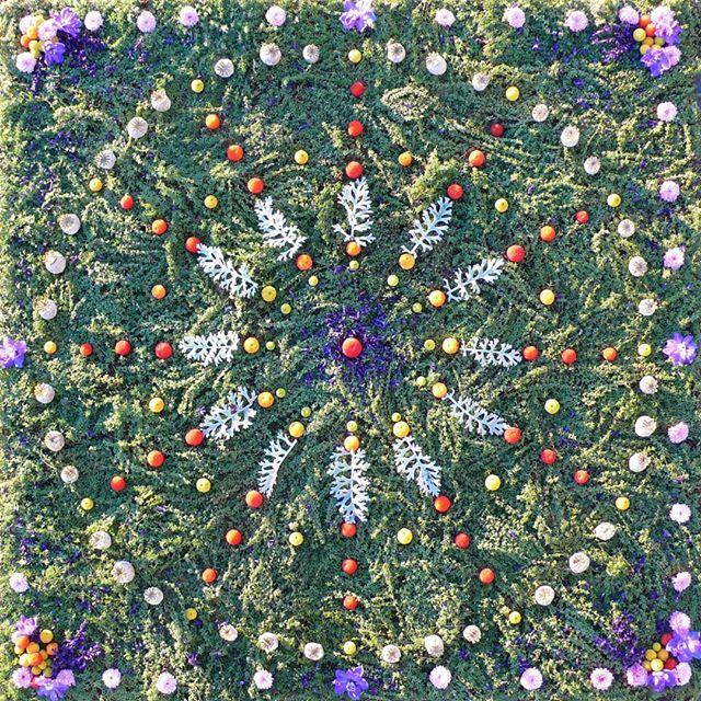 "TBT. Where The Wild Thyme Blows (4' x 4') ~ thyme, poppy pods, salvia, arbutus unedo fruit, delphiniums, purple mums. ""Painting"" with thyme is like creating a magical carpet in the elemental realms.  This is a lemon thyme, so even more fragrant. . . . . . . . . . #sacredart #sacredspace #naturemandala #flowermandala #healingmandala #earthprayer #natureart #botanicalmandala #gypsysoul #bohemianstyle #spiritualart #intuitiveart #floweralchemy #flowermagic #flowermedicine #natureprayer #seedscolor #underthefloralspell #byarrangement #flowerstagram #florallove #flowerart #flowermagic #mybotanicalheart #aquietstyle #slowfloralstyle #inspiredbypetals #inspiredbynature #madewithlove #botanicaldaydreams"