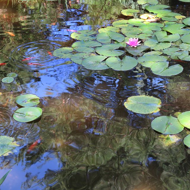 Truly a hidden treasure of WI.  I was delighted to find the @bookworm_gardens  This is the stunning koi pond within the gardens. . . . . . . . . #magicgarden #gardenlove #inspiredbynature #conservatorygarden #floweralchemy #naturalpatterns #garden_styles #gardenlife #gardendesign #koifish #koipond #koifishpond #aquaticplants #aquascaping #koiart #aquascape #wisconsininspiring #gardening_feature #gardendesignideas #gardenculture #landscapestyles #landscapedesign #landscapedesigns #gardendesigninspiration #landscapedesigning #bookwormgardens