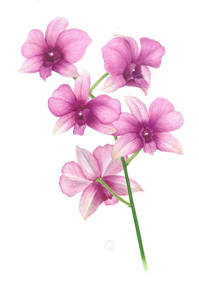 orchidexhibpage.jpg