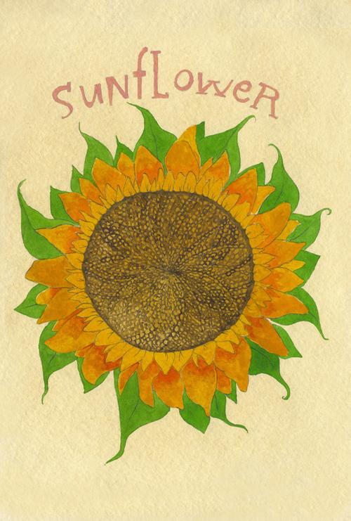 sunflower_b.jpg