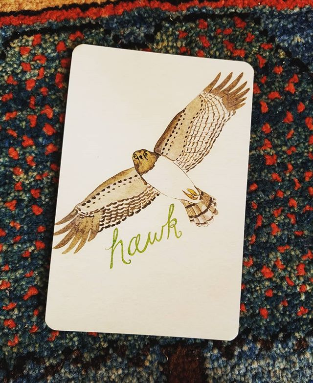 GIVEAWAY reminder, followed by a PSA from Hawk. If you'd like to enter to win a deck if your very own, it's terrifically simple! Follow me, and tag One new to me friend in the comments. Giveaway closes at midnight west coast time. I'll draw a winner and announce tomorrow! 🌈🌈🌈 Field Guide Note from Hawk: Raise your gaze from a situation you've been intent on these last several weeks.  Give the whole scene more room to breathe. A solution that's been elusive, or squirming under scrutiny, will find a way through to you, (right now, especially) without your full attention on it. Step off your own stuff, and see what's been waiting to unfold under its own power.  Artwork by @juliannagoldenbright  #fieldguidedeck #oraclereading #hawkmedicine #pdxpsychic