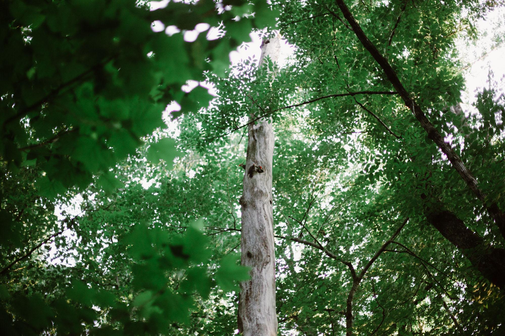 SarahMattozziPhotography-Elopement-CharlottesvilleVA-17.jpg