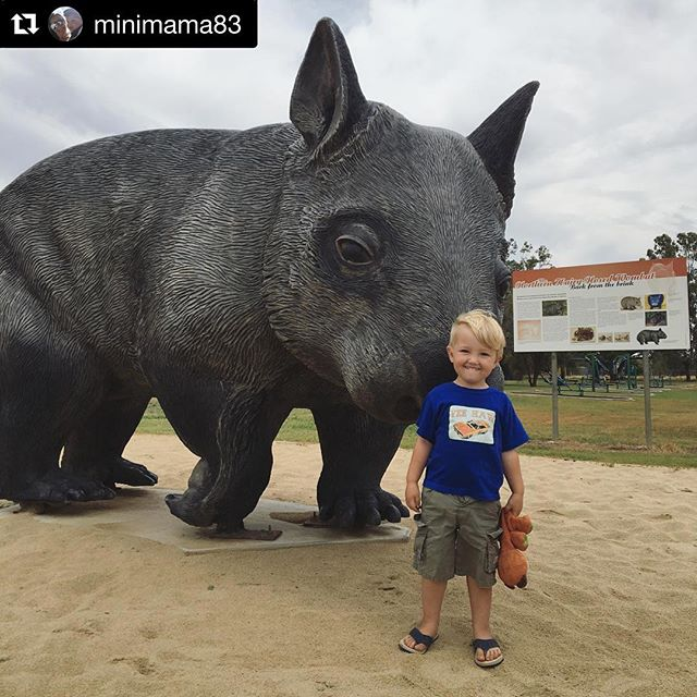 #Repost @minimama83 with @get_repost ・・・ 🌾 sadly this was the only wombat we saw on our travels 🌾  But he was still pretty cute. Archie was pretty keen to check him out and give him a pat, but not so keen on climbing up for a ride 🙈  #thallon #wombat #outbackqueensland #visitoutbackqueensland #lovequeensland #aussie #australia #travel #travelaustralia #travelaustraliawithkids #tawk #bigthings