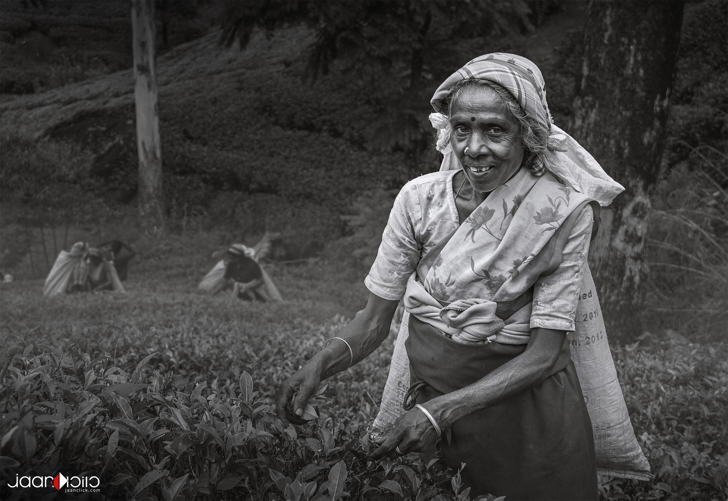 srilanka tea.jpg
