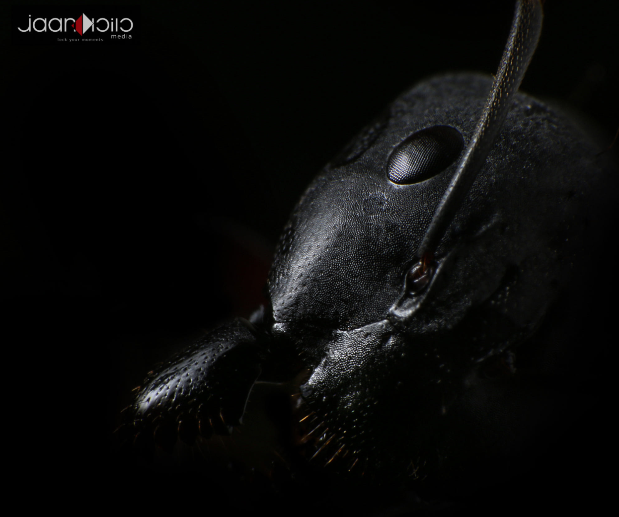 ant eyes.png