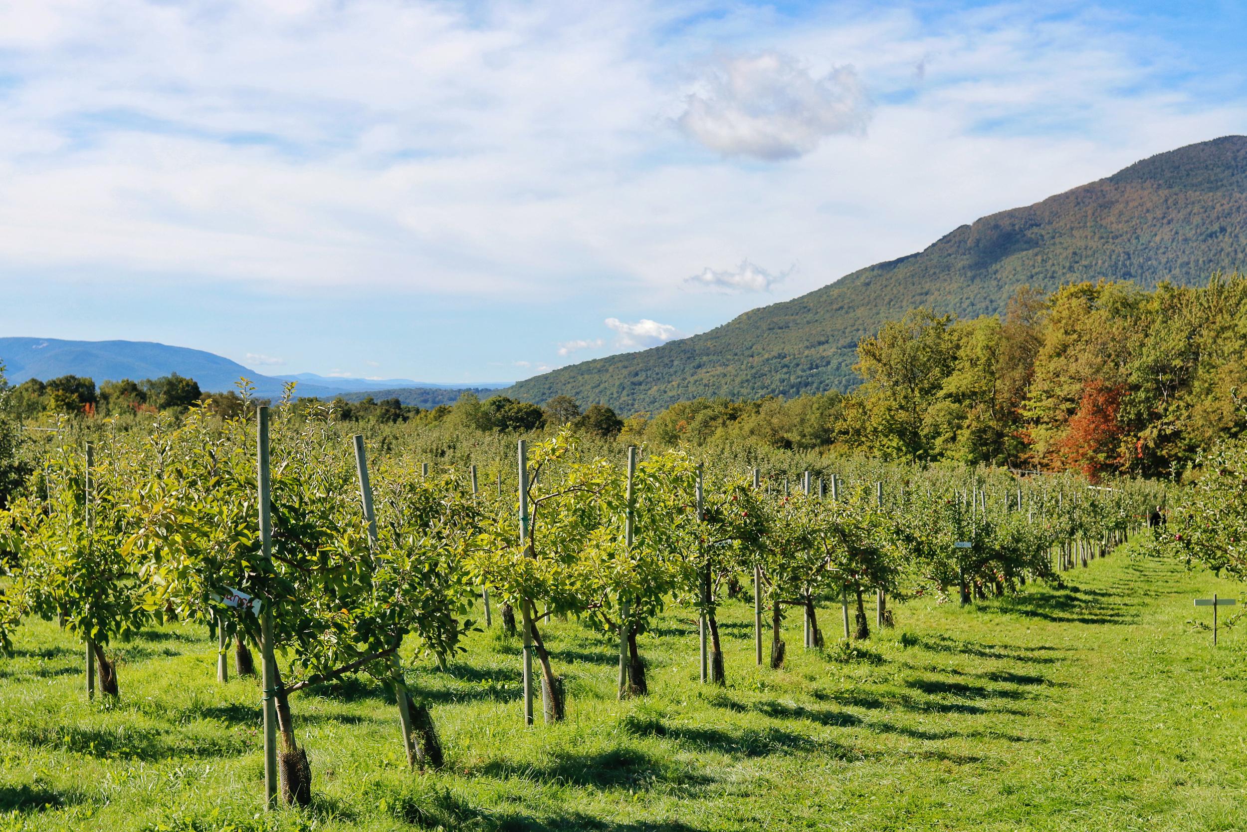 Mad Tom Orchard Dorset Vermont