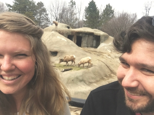 Falling in love with these Mountain Goats at the BEST ZOO DAY EVER.