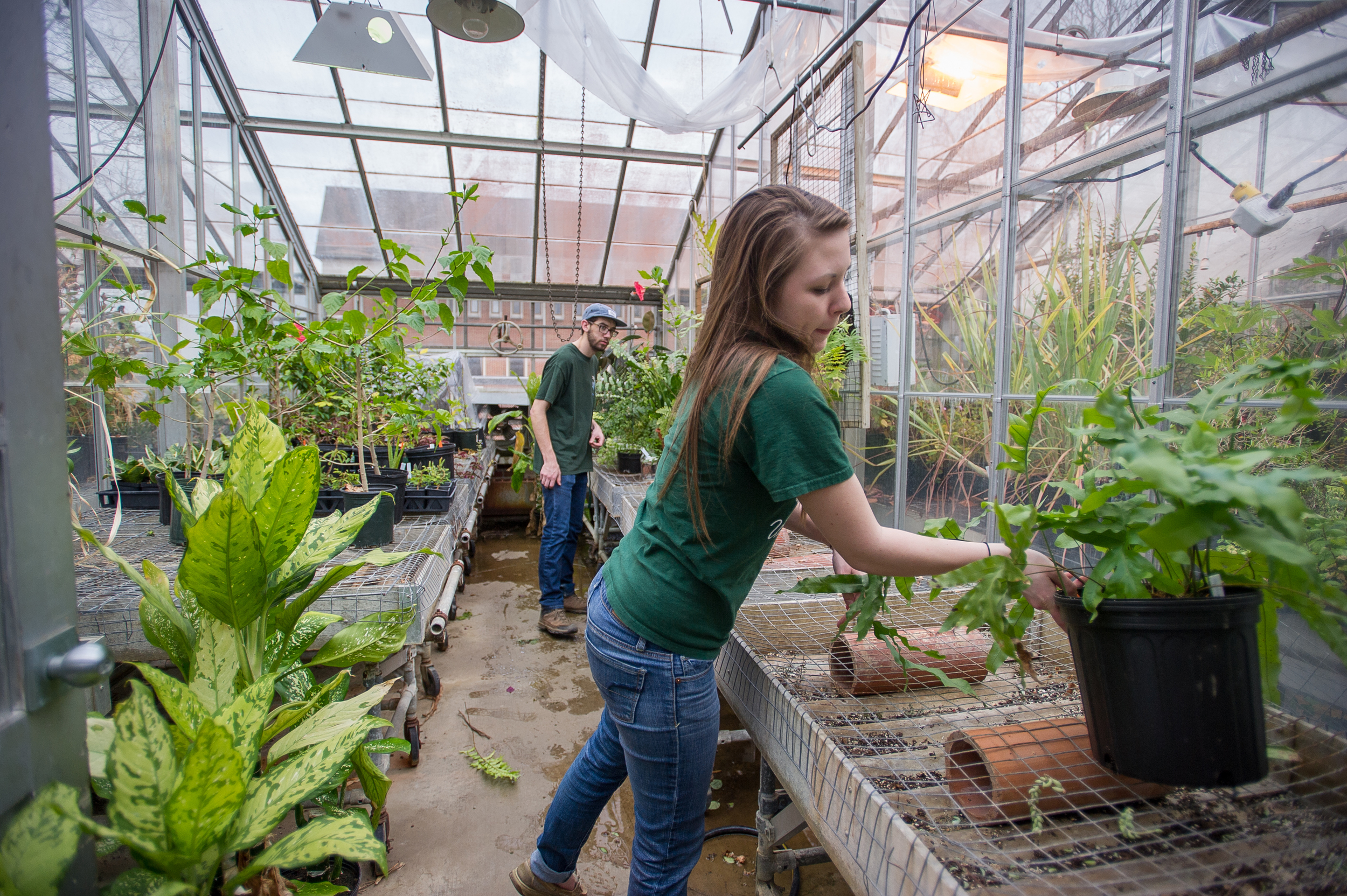 """Bethany Zumwalde, an Ohio University graduate student studying plant biology, and Jacob Mullins, a senior studying plant biology, move plants to various parts of the greenhouse located behind Scott Quadrangle in Athens, Ohio, on April 6, 2015. The students work in the greenhouse to supplement their educational experience in their field of study. """"Being in the greenhouse is an overwhelming sensory experience because you get the opportunity to see and smell hundreds of different plants from all over the world,"""" says Zumwalde. (©2015 Sarah Stier for VICO 2390)"""