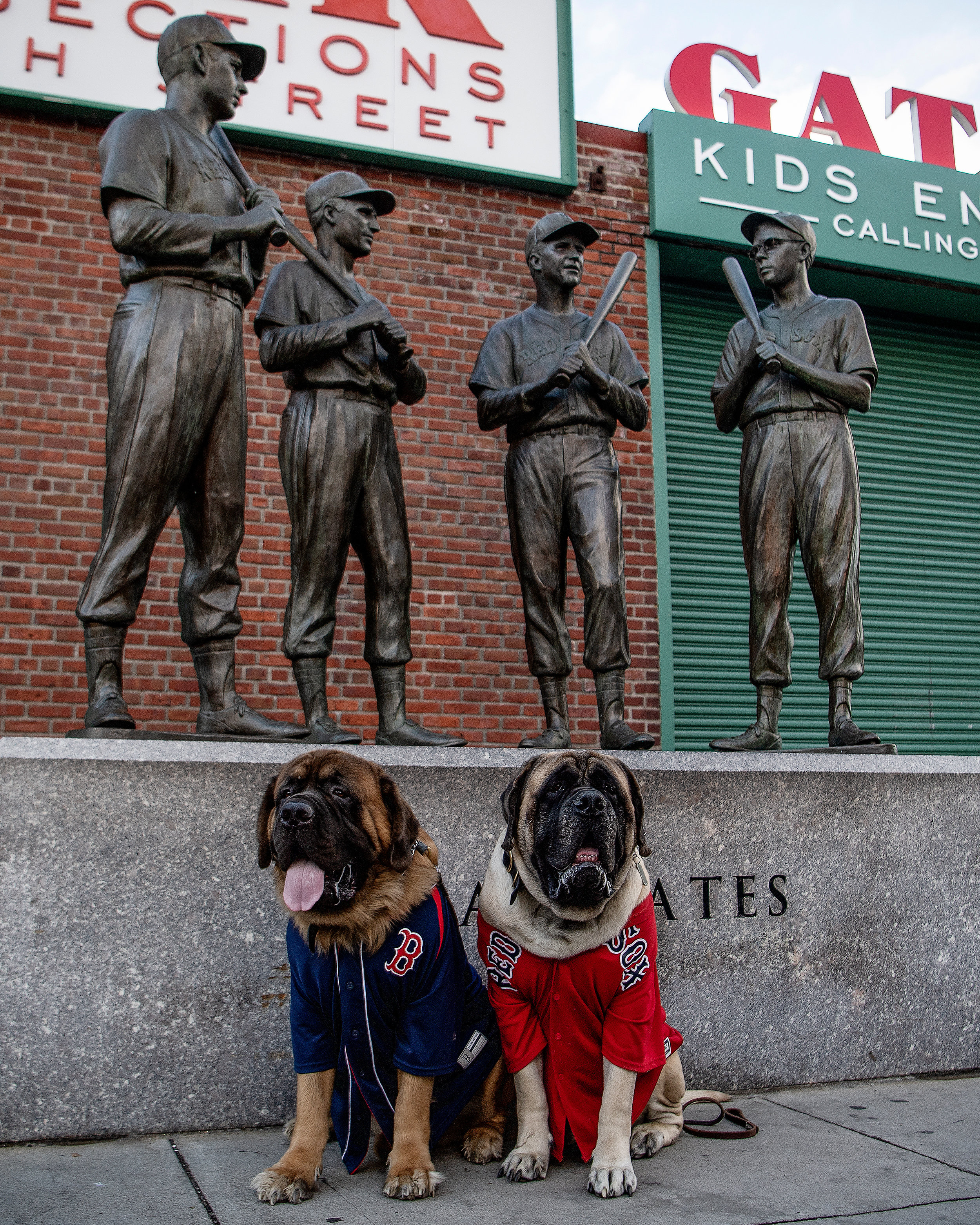 English Mastiffs Odin and Thor pose for a photo before game one of the ALCS versus Houston Astros at Fenway Park in Boston, Massachusetts, on Saturday, October 13, 2018.