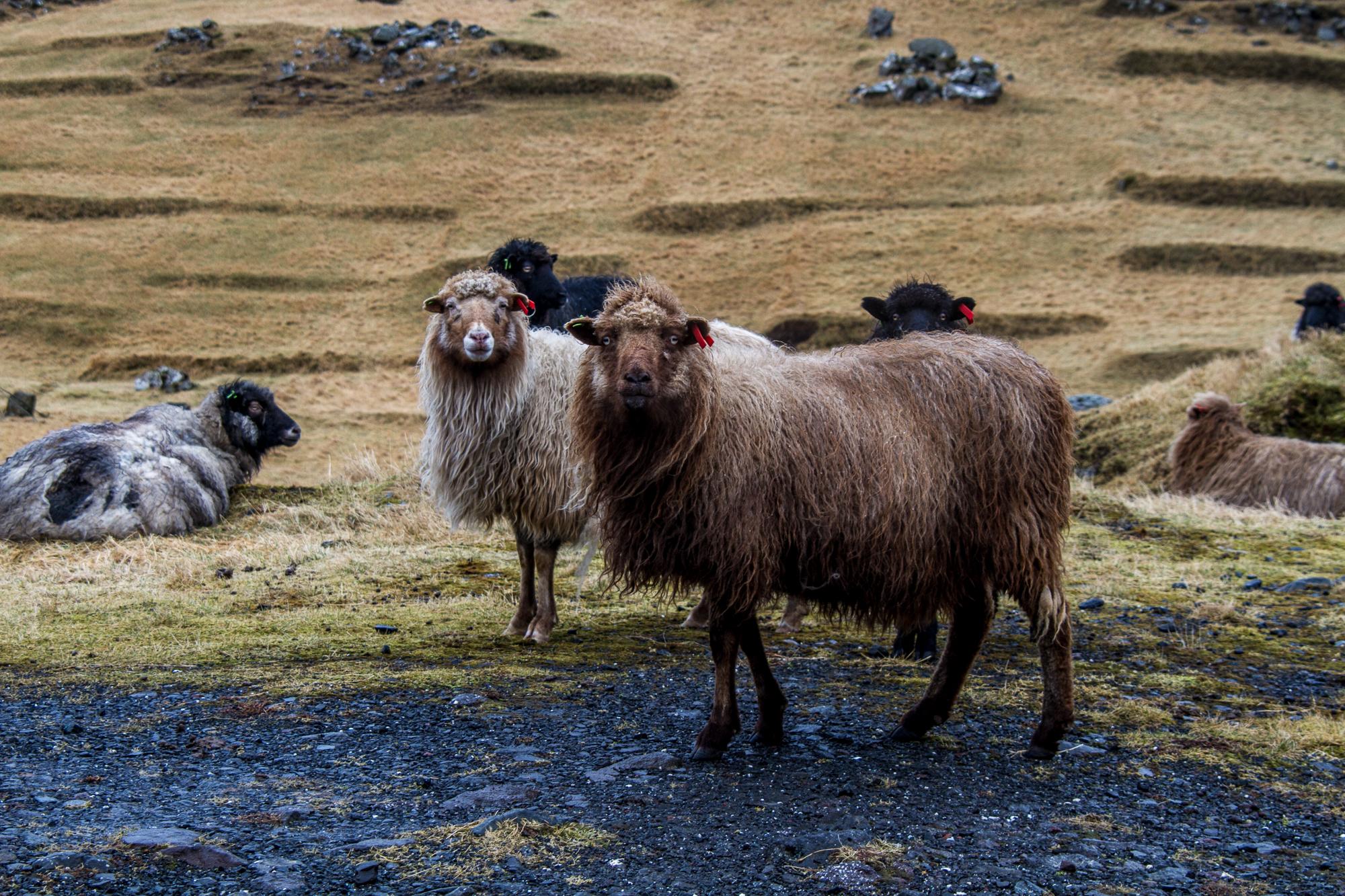 Färöer-6375.jpg