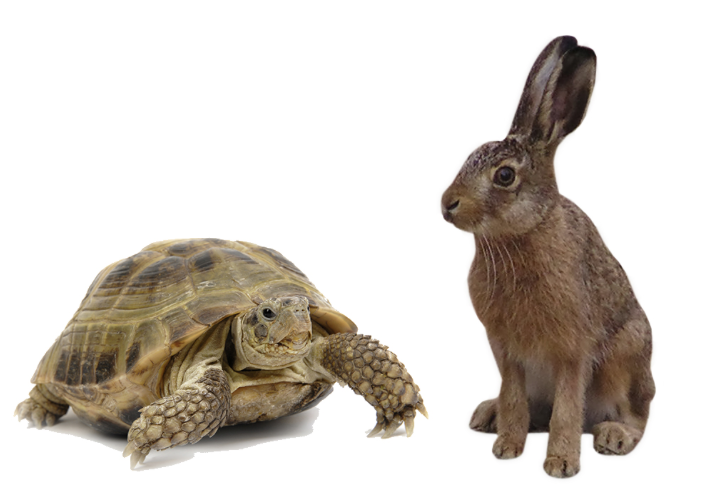 Tortoise and the Hare - Alexander Technique